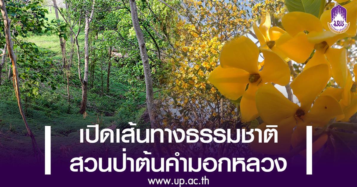 เปิดเส้นทางธรรมชาติสวนป่าต้นคำมอกหลวง