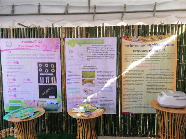 """คณะเกษตรศาสตร์และทรัพยากรธรรมชาติ ม.พะเยา เข้าร่วมงาน """" วันเก็บเกี่ยวข้าวหอมมะลิโลก อ.ดอกคำใต้ จ.พะเยา """""""