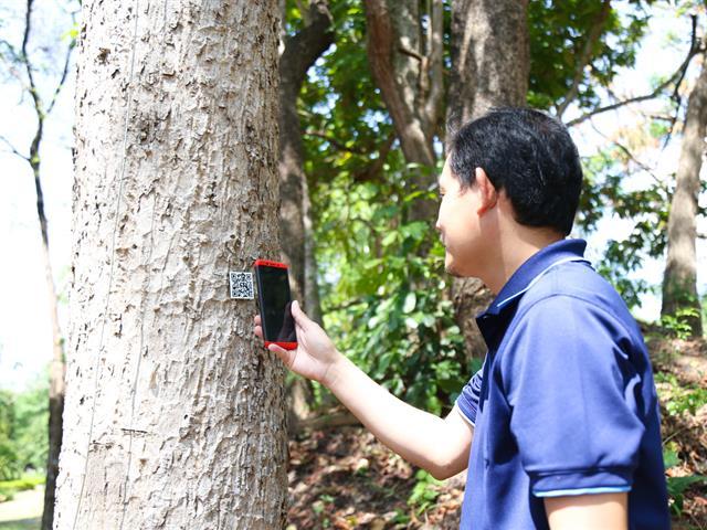 อธิการบดีมหาวิทยาลัยพะเยา  นำทีมผู้บริหาร คณาจารย์ และเจ้าหน้าที่ ปลูกต้นกล้วยเพื่อทำแนวป้องกันไฟป่า