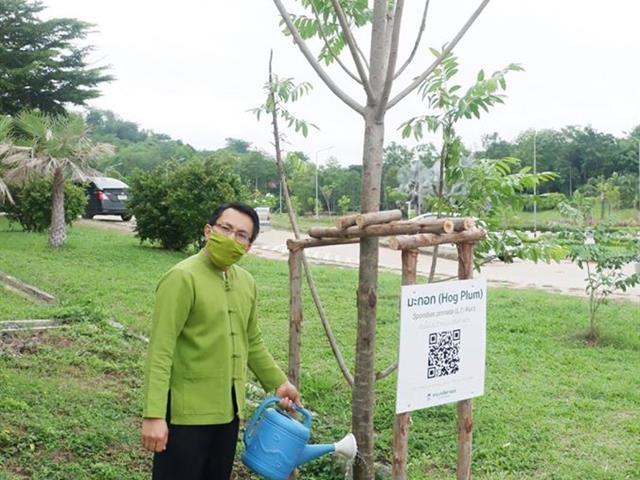 ต้นไม้ประจำคณะเภสัชศาสตร์