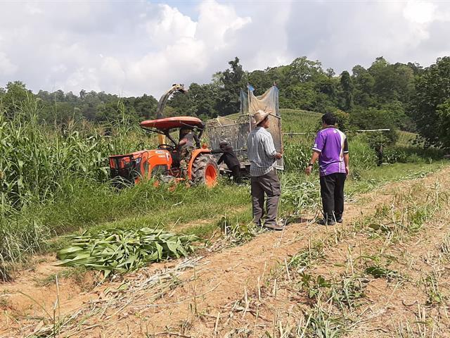คณะเกษตรศาสตร์และทรัพยากรธรรมชาติ ม.พะเยา ลงพื้นที่เพื่อถ่ายทอดเทคโนโลยีการใช้หัวเชื้อจุลินทรีย์และเอนไซม์เพิ่มประสิทธิภาพการหมักต้นข้าวโพดพร้อมฝักเพื่อใช้เป็นอาหารสัตว์คุณภาพ