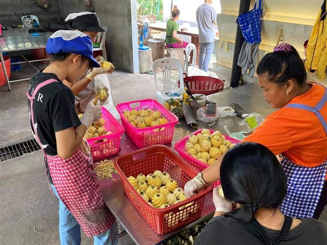 คณะเกษตรศาสตร์ฯ ลงพื้นที่ดำเนินการวิจัยและบริการวิชาการด้านการใช้เศษสับปะรดภูแลเป็นอาหารโคขุน