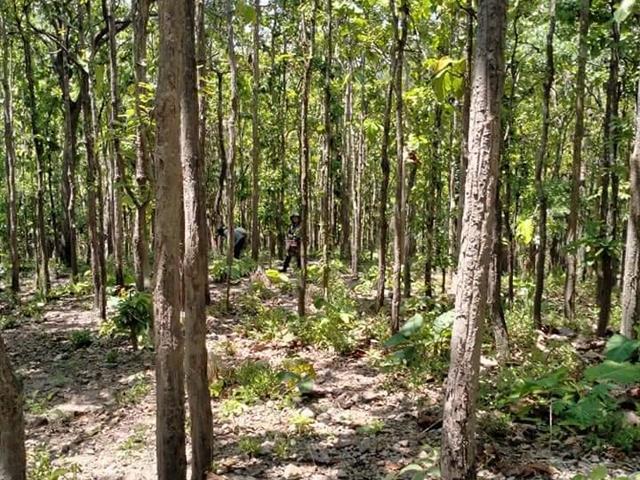 ม.พะเยา ร่วม จุฬาลงกรณ์ มหาวิทยาลัย และศูนย์พัฒนาห้วยฮ่องไคร้ฯ ส่งเสริมการเพาะเห็ดเผาะเพื่อการฟื้นฟูสภาพป่าด้วยกล้าไม้ท้องถิ่น
